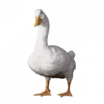Aflac launches TV commercial for Hispanics