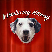 harvey the marketing dog