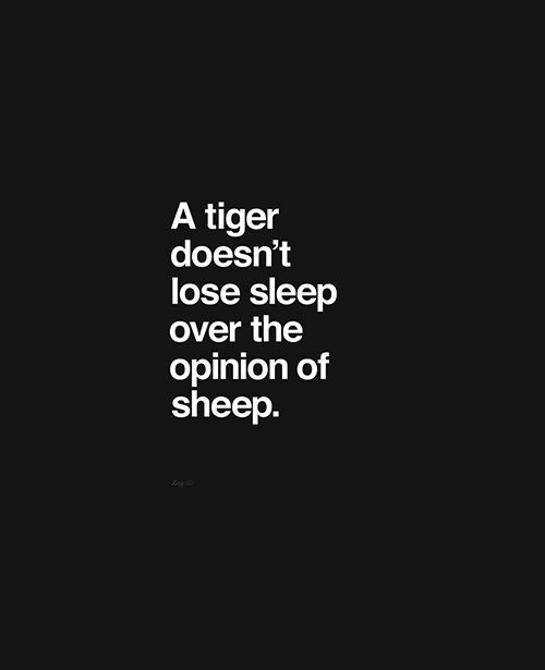 a tiger doesn't lose sleep over the opinion of a sheep #quotes