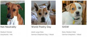 Adoptable trends campaign by Dieste