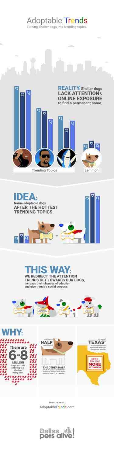 DPA Adoptable Trends Campaign info graphic by Dieste